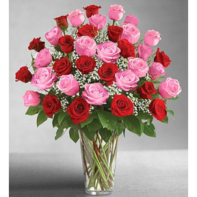 Ultimate Elegance Long Stem Pink & Red Roses (36 Steam)