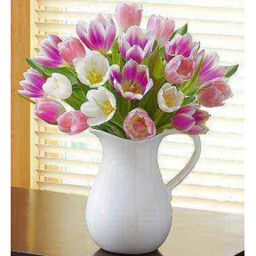 Pitcher Full of Tulips (Premium)