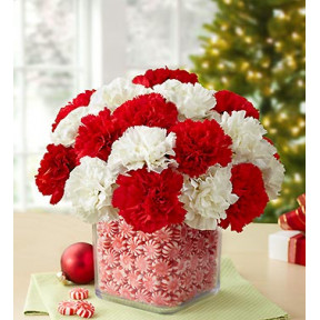 Vase with 20 Red and White Carnations