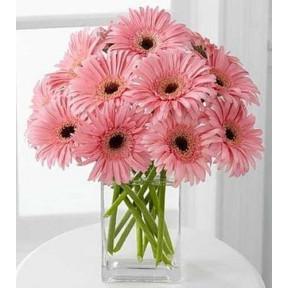 Vase With 15 stems of Pink Gerberas