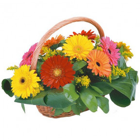 Basket Of 15 Mixed Gerberas