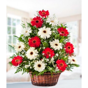 Basket Of 20 Red and White Gerberas