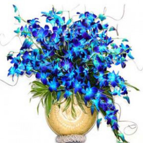 Vase with 15 Blue Orchids