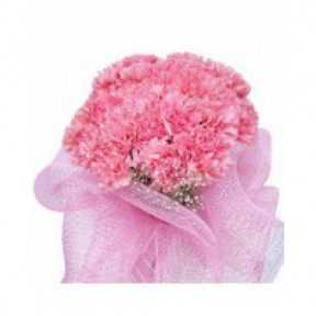 Bunch of 20 Pink Carnation