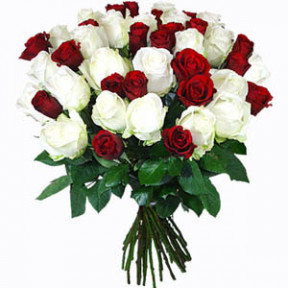 Bunch of 40 Red White Roses