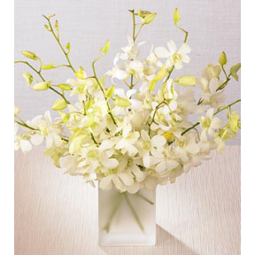 10 White Orchids in glass vase