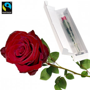 Red long-stemmed Fairtrade rose