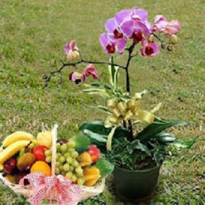 Orchid & Fruit Basket