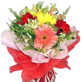 6 Mixed Gerbera