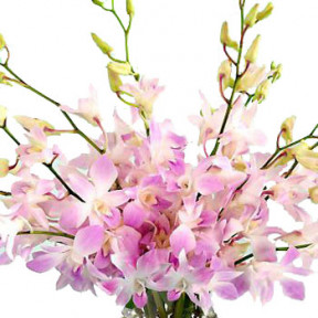 Pink Orchids Hand Bouquet