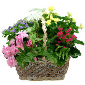 Seasonal Plants in Basket