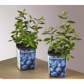 Blueberry Garden Kit