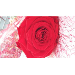 Gift Wrapped Single Red Rose