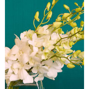 White Orchids In Bouquet
