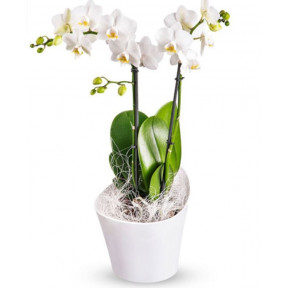 Orchids For Change & Plan Gift Card