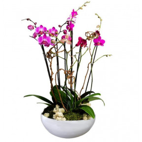 Arrangement With Fuchsia Phalaenopsis Orchids
