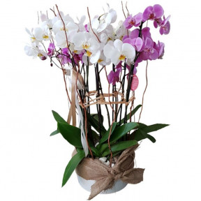 Ceramic Pot With Pink And White Orchids