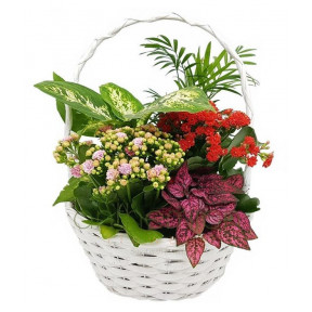 Assortment Of Plants In A Round Wooden Base