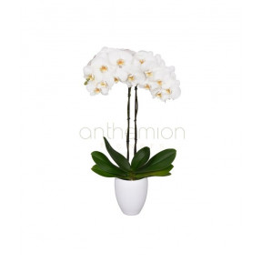 White Exotic Orchid Plant