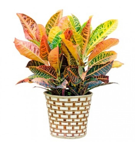 Custom Green Plant (Medium)
