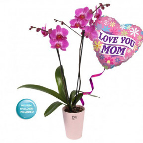 Lovely Mom Orchids