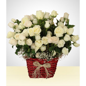 Champagne Impact: 100 White Roses Arrangement