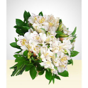 Friendly: White Astromelias Bouquet