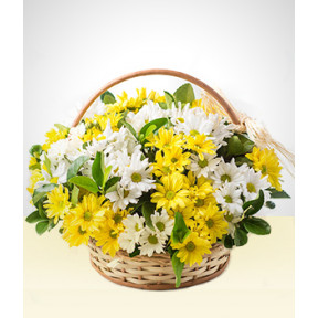 Memories: White and Yellow Daisies