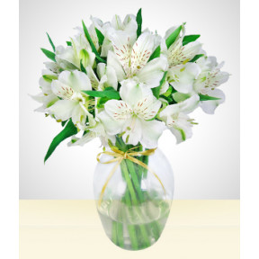 To a beloved one: Vase with White Astromelia