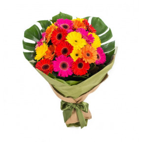 Gerberas Colour Burst (30 Stems)