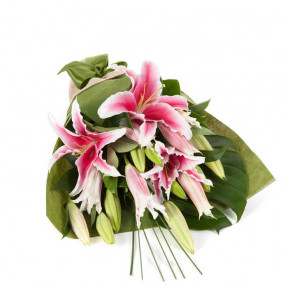 Pink Oriental Lilies (5 Stems)