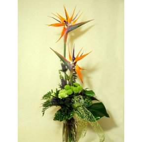 Welcome parrot with flowers (Medium)