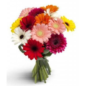 12 Mixed Gerberas Bouquet