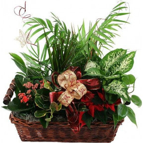 Basket Arrangement Of 4 To 5 Plants
