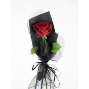 Single Poinsettia Potted Plant