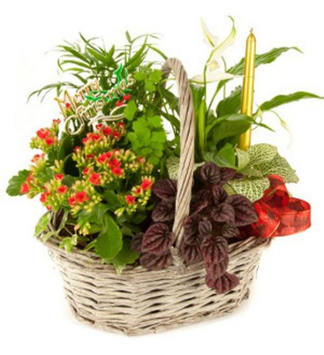 Basket Of 4 To 5 Plants