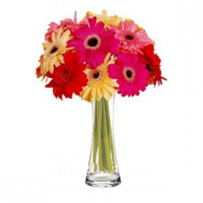 Mixed Gerberas to Indonesia