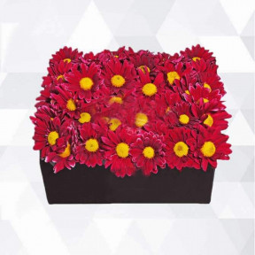 Box Chrysanthemums (Small)