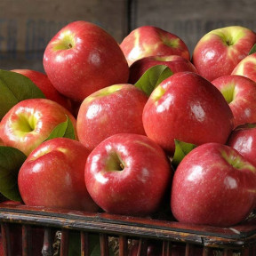 Pink Lady Apples (Classic)