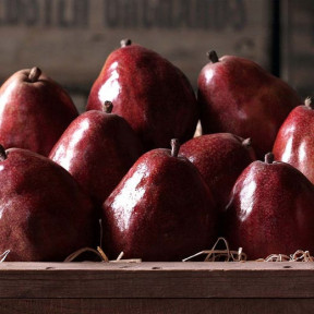 Columbia Red Pears (Classic)