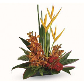 Tropical Splendour (Small)