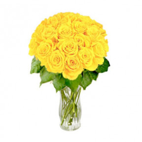 Magnific Yellow (24 Rosesus)