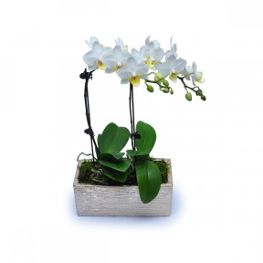Mini White Orchids 7