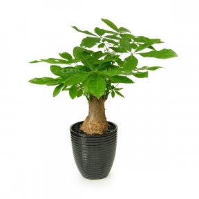 Potted Plant 4s
