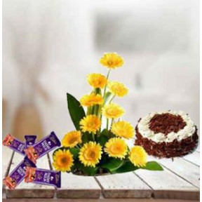 Gerbera, Cake and  Chocolates (12 Yellow Gerbera,1Kg Chocolate Cake,5Dairy Milk)