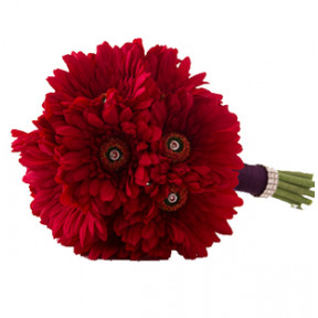 Red Gerbera Bouquet (24 Red Gerbera)