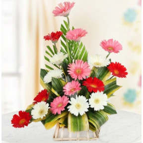 Mix Gerbera Arrangement (Mix Gerbera Arrangement-18 Flowers)