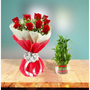Lucky Bamboo Plant + Roses Combo (Lucky Bamboo Double Layer + 12 Red Roses Tissue Wrapping)