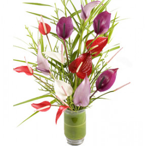 Mixed Anthurium In Vase