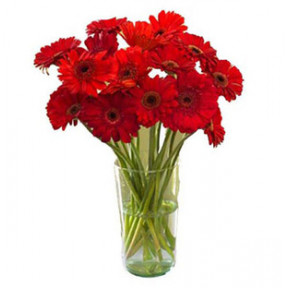 Red Gerbera Vase (24 Flower)